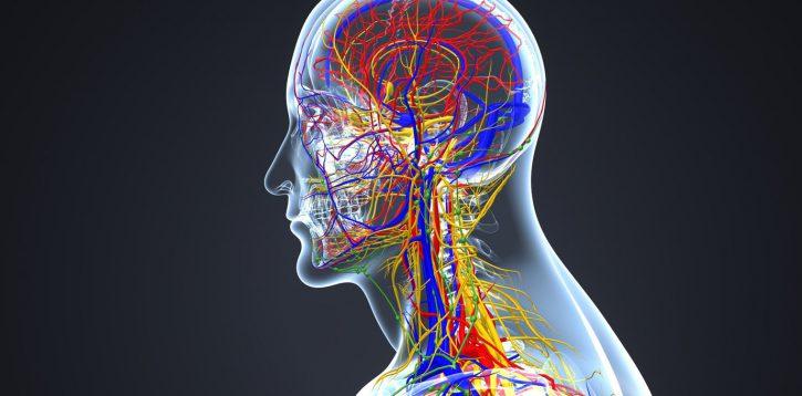 Modele anatomiczne czy warto je pozyskać w hipermarkecie internetowym?